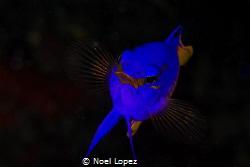 gramma loreto, canon 60D, canon lens 100mm, two ikelite s... by Noel Lopez