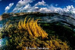 Sea anemone by Scozio Salvatore