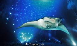 Kona, HI. night dive by Margaret Xu