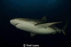 caribean reef shark, canon 60D,tokina lens 10-17mm at 10m... by Noel Lopez