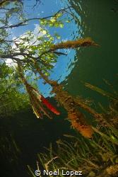 mangrobe forest, nikon D800E, tokinas lens 10-17mm, two i... by Noel Lopez