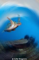 Flying Turtle by Sofia Tenggrono