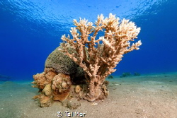 Coral Shot with a Sony RX100 VI and UWL-09 Lens by Tal Mor