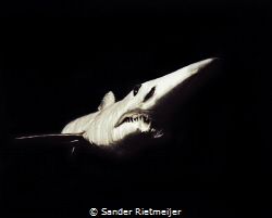 Mako Shark black/White by Sander Rietmeijer