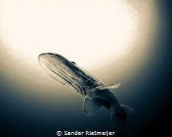 Beautiful Pike by Sander Rietmeijer