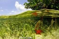 mangrove split, canon 60D ,tokina lens 10-17mm at 10mm, t... by Noel Lopez