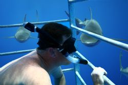 Your OTHER Left. Image taken on a shark cage adventure, N... by Mathew Cook