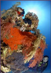 back in the red sea and posting via 3G from here on the b... by Fiona Ayerst