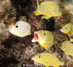 Fish Talk by Brian Perry