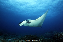 When a quite an ordinary dive is turned into something ex... by Daniel Lamborn