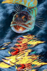 In the mirror ... Jawfish was taken in the Lembeh Strai... by Michal Štros