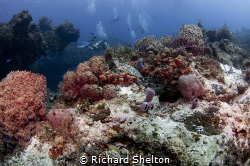 Missed Me,  A typical drift dive at Tormentos, Cozumel, M... by Richard Shelton