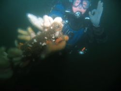 Diver on conning tower of U 274 off Dunbar, Scotland take... by Michael Moore