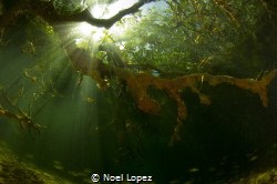 mangrove forest, canon 60D, tokina lens 10-17mm at 10mm, ... by Noel Lopez