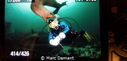 A Stellar Sea Lion decoded it wanted to play with my wife... by Marc Damant