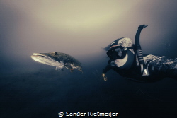 Swimming up with this beautiful pike. by Sander Rietmeijer