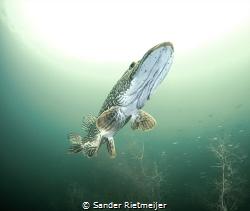 Say hello to my friend. by Sander Rietmeijer