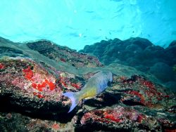 Parrott on the reef by Peter Foulds