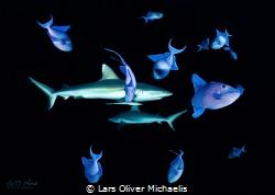 grey reefsharks @ maldives by Lars Oliver Michaelis