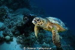 Hawksbill sea turtle (Eretmochelys imbricata) by Oksana Maksymova