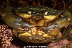 Crabs do what crabs do by Rune Edvin Haldorsen