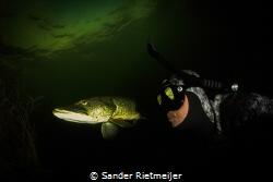 Pike skin reflection by Sander Rietmeijer