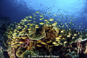 Life explosion on the reef by Jose Maria Abad Ortega