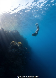 coral lover by Rune Rasmussen