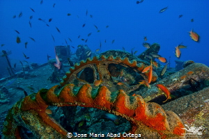 SS Thistlegorm  Detail on the deck of the sunken ship  by Jose Maria Abad Ortega