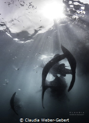 whaleshark encounter in Triton Bay - West Papua by Claudia Weber-Gebert