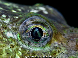 Eye of Agonus cataphractus Canon G16 & +15 diopter by Athanassios Lazarides