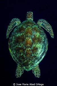 Turtle on the dark abyss by Jose Maria Abad Ortega