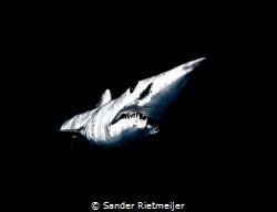 Short vin Mako Shark at Baja California by Sander Rietmeijer
