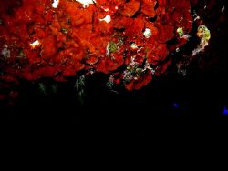 Roses are red. Damsels are Blue.  by Peter Foulds