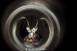 Mimic Octopus by Rudy Janssen