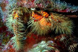 This little hairy Hermit could do with a trim!.........Ni... by Brian Mayes