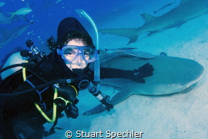 Young diver petting a lemon shark.  The shark sat on the ... by Stuart Spechler