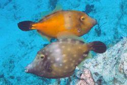Double file in Cozumel. Fuji Finepix S2, dual SB-105 stro... by Stuart Spechler