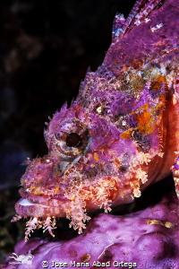 Scorpion fish face by Jose Maria Abad Ortega