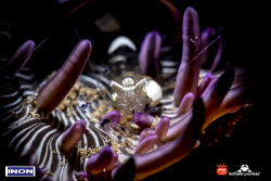 Cleaner shrimp inside a small anemon with snooted light by Raffaele Livornese