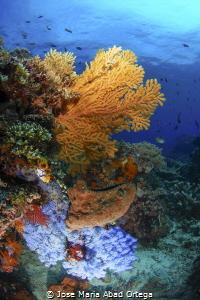 Seascape from Bangka Island Nort Sulawesi Indonesia by Jose Maria Abad Ortega