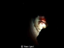 Octopus eye by Yoav Lavi