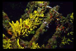 a part of a wreck in the adriatic.(francesca di rimini)ni... by Andy Kutsch