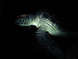 Night Cruise - taken during nightdive with Sea & Sea DX80... by Heru Suryoko