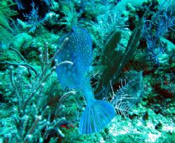 Taken August 2006 at East end of Grand Cayman with a Cano... by Bonnie Conley