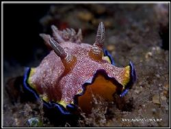 14 years of diving in Perhentian Malaysia and still surpr... by Yves Antoniazzo