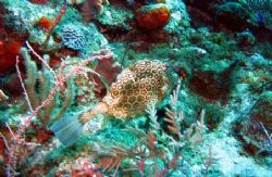 Photo taken August 12, 2006 at East end of Grand Cayman u... by Bonnie Conley