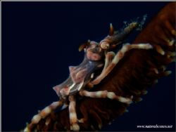 Same crab but diffrent camera E900 by Yves Antoniazzo