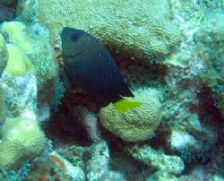 Photo taken August 13,2006 at East end of Grand Cayman wi... by Bonnie Conley