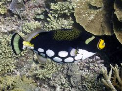 Just clowning about here on the reef! by Brian Mayes